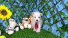 Elliot West Highland White Terrier (4)